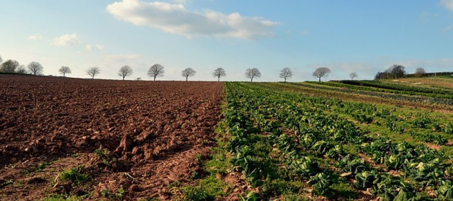 Uskoro Zakon o sezonskim radnicima u poljoprivredi