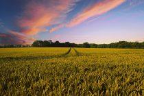 Projekat razvoja konkurentnosti poljoprivrede u Republici Srbiji