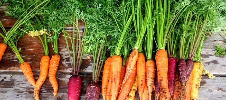 Šta se od povrća sadi u martu?